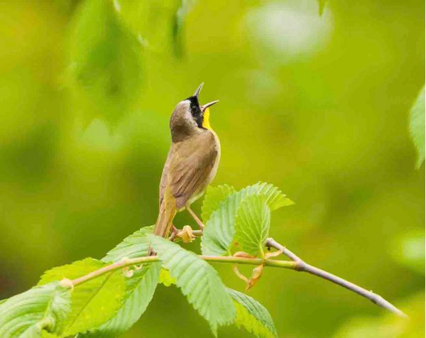 Bird Song - A Chirping Tweet For The Day